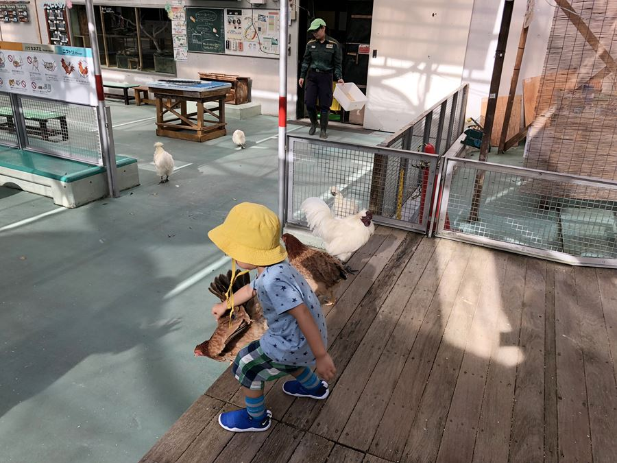 野毛山公園のふれあい広場にいるニワトリ写真