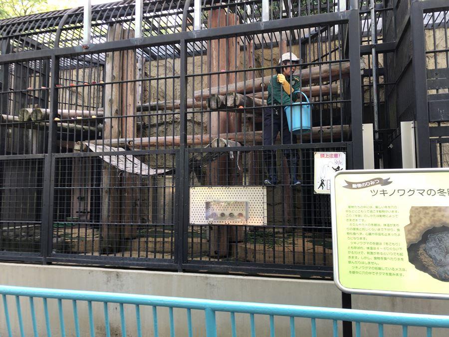 野毛山動物園のツキノワグマの給餌