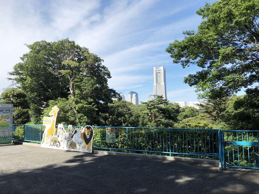 野毛山動物園から見えるランドマークタワー