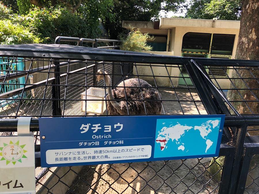 野毛山動物園のダチョウ