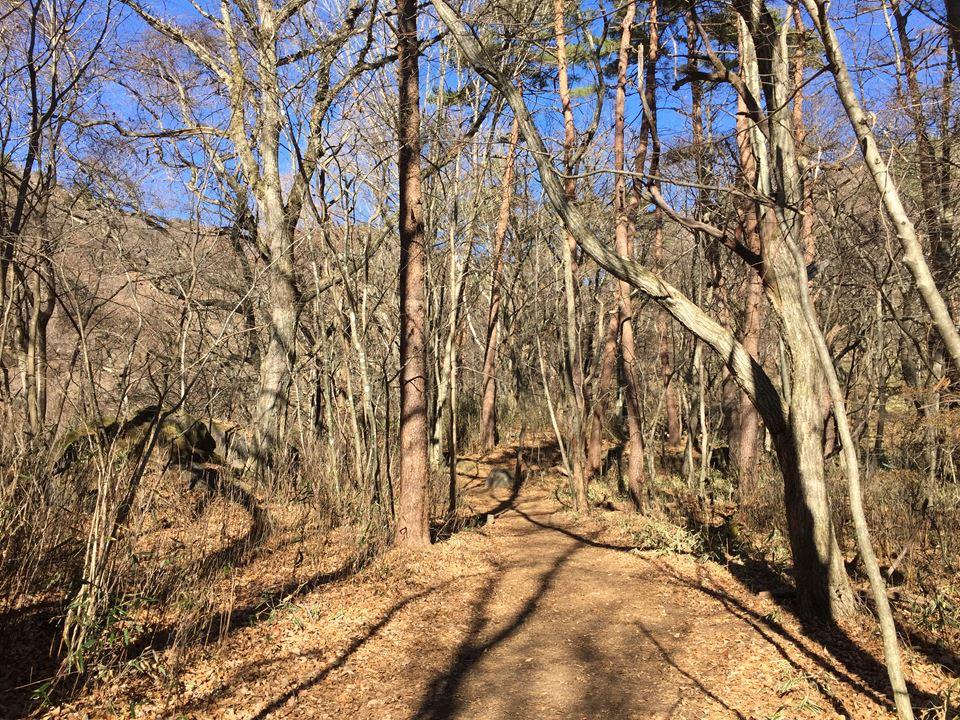 山梨県北杜市、清里高原の川俣渓谷にある吐竜の滝写真