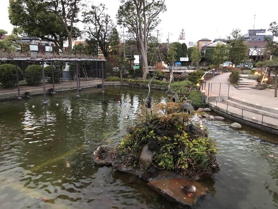 川崎大師つるの池の写真