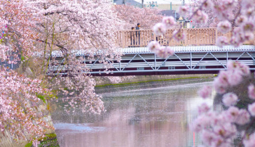 横浜『第27回 大岡川桜まつり』2019年3月30日~4月1日。蒔田公園(南区)でも同時開催!