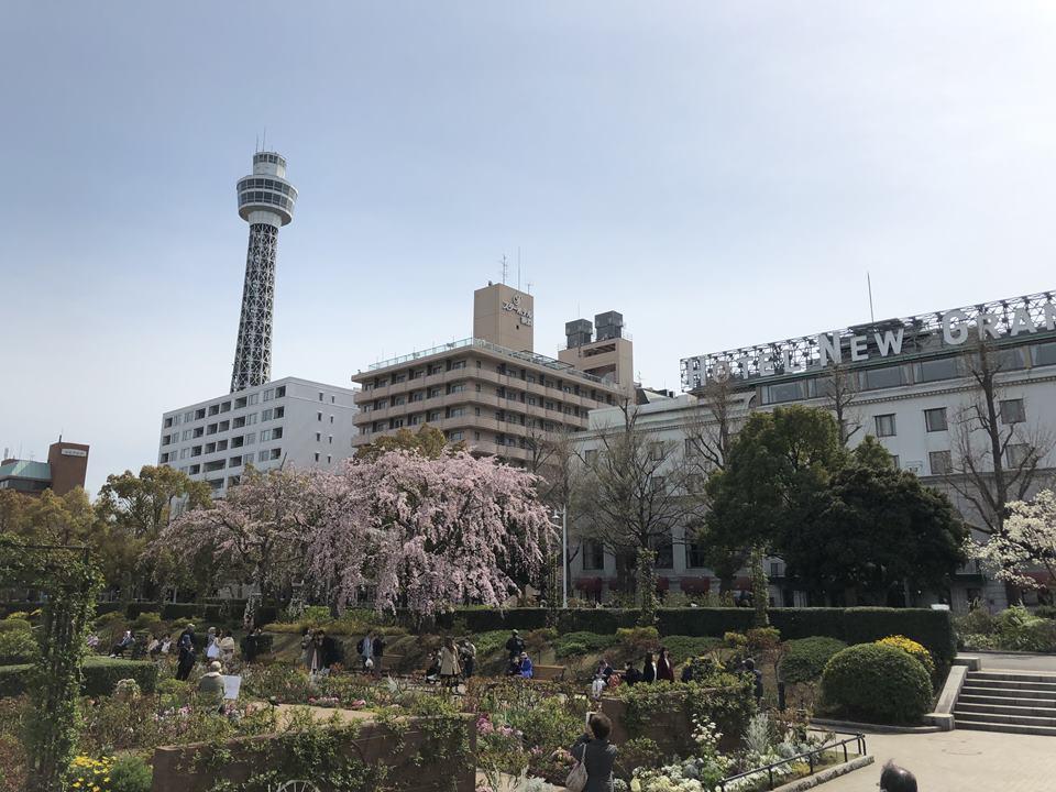 山下公園から見る横浜マリンタワー