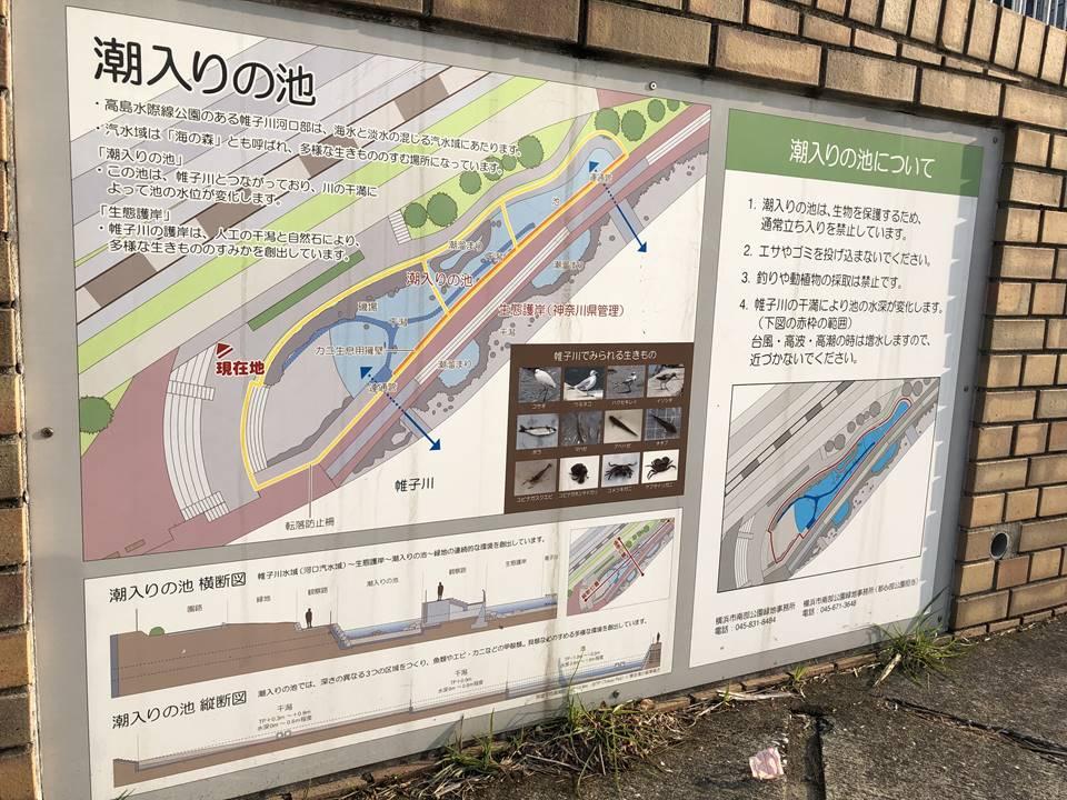 横浜駅とみなとみらいの間にある「高島水際線公園」の潮入の池