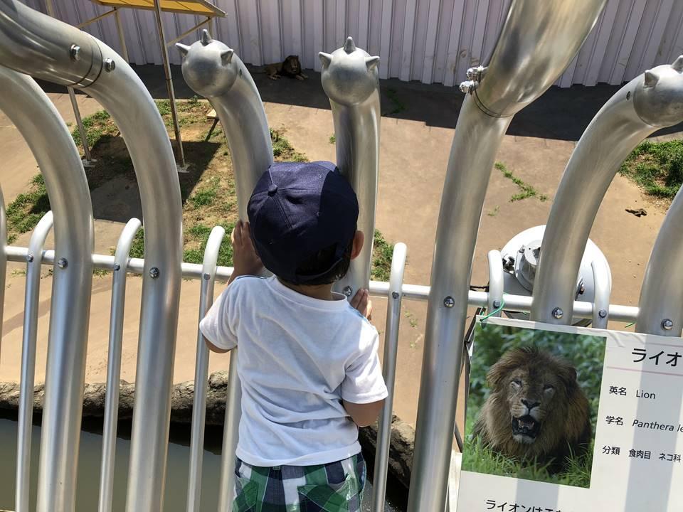 多摩動物公園のアフリカ園