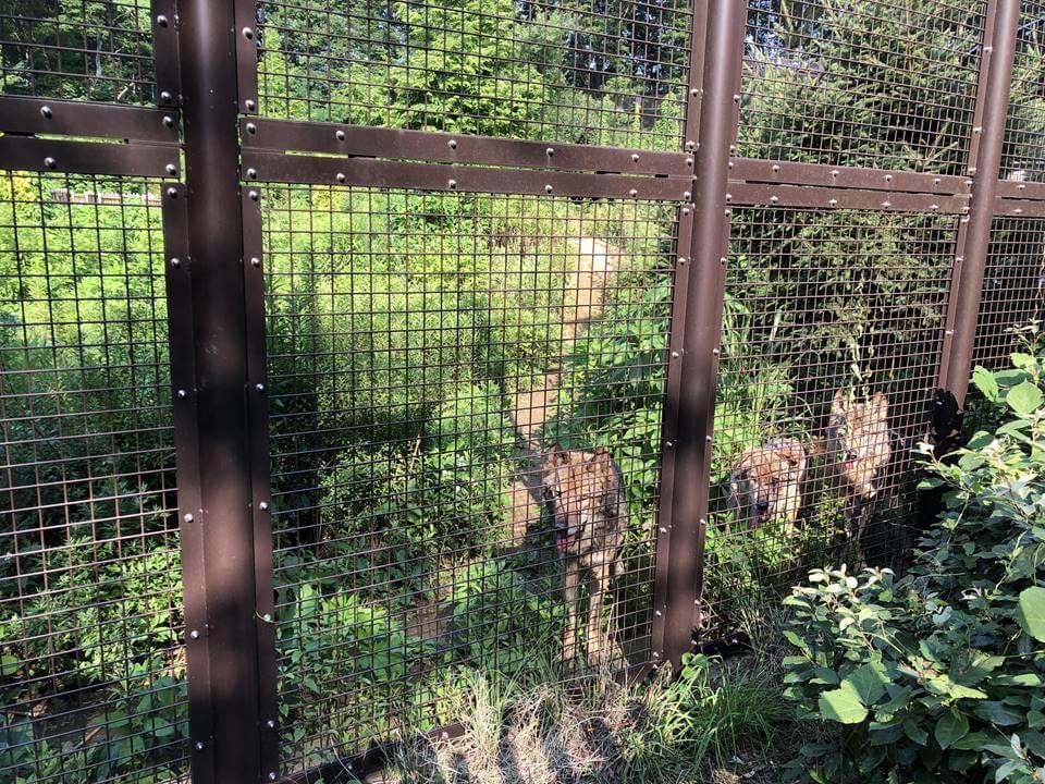 多摩動物公園のアジア園