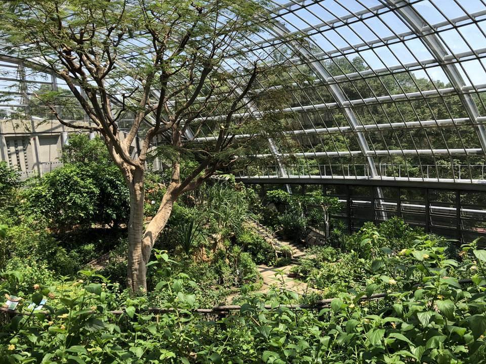 多摩動物公園の昆虫園にある生態園