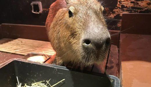 【オービィ横浜】みなとみらいで動物とふれあえる屋内型パーク。雨や熱中症を気にせず遊び倒せます!