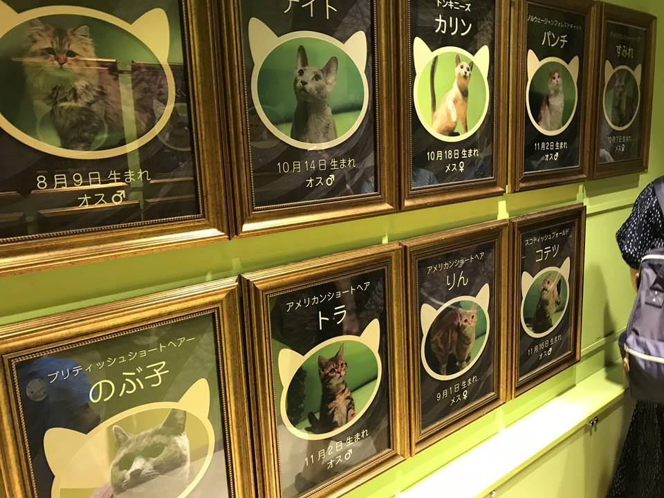 オービィ横浜のキャットパラダイス写真