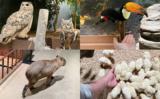 Moff Animal World MARK IS みなとみらいの動物写真